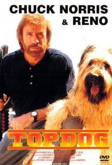 постер к фильму Главная собака