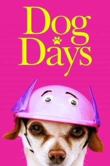 постер к фильму Собачьи дни